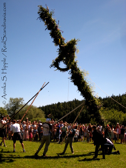 Raising the maypole on Midsummer's Eve