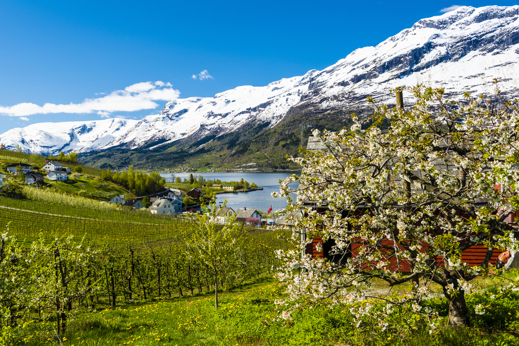 Spring at Lofthus in Hardanger. Photo © Fjord Norway / Robin Strand